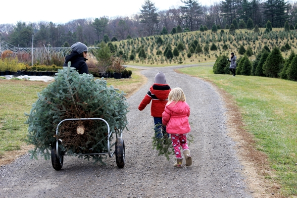 Christmas Tree Farm Maryland
