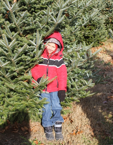 Davidson Tree Farm Maryland